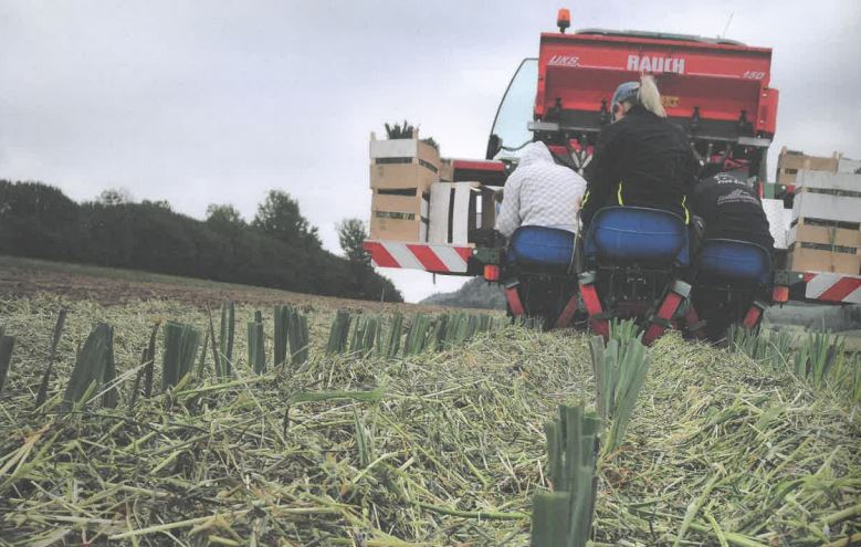 Inspiriert von der Natur: Innovative Mulchpflanztechnik im Gemüseanbau